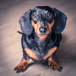 "Different kind of ""dox,"" and not nearly as cute. Photo credit: Stylized portrait of Dachshund on wooden background // ShutterStock"