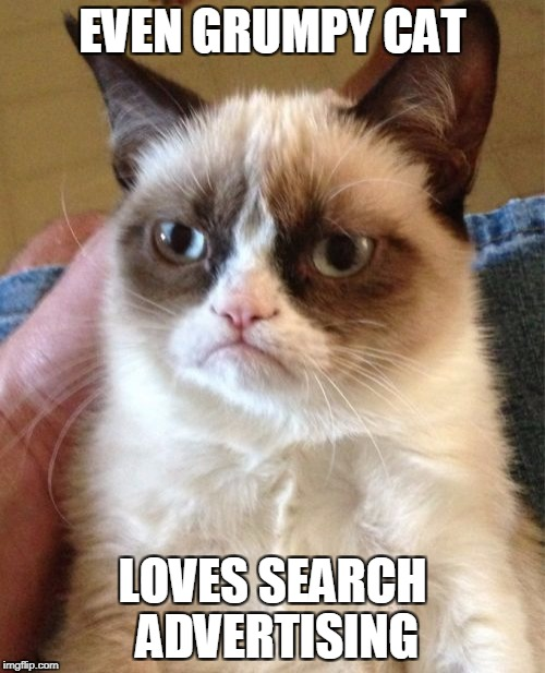 grumpy cat search